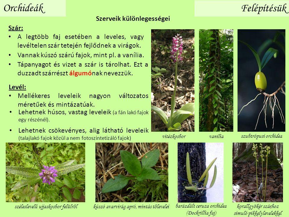 Szár: A legtöbb faj esetében a leveles, vagy levéltelen szár tetején fejlődnek a virágok. Levél: Mellékeres leveleik nagyon változatos méretűek és min