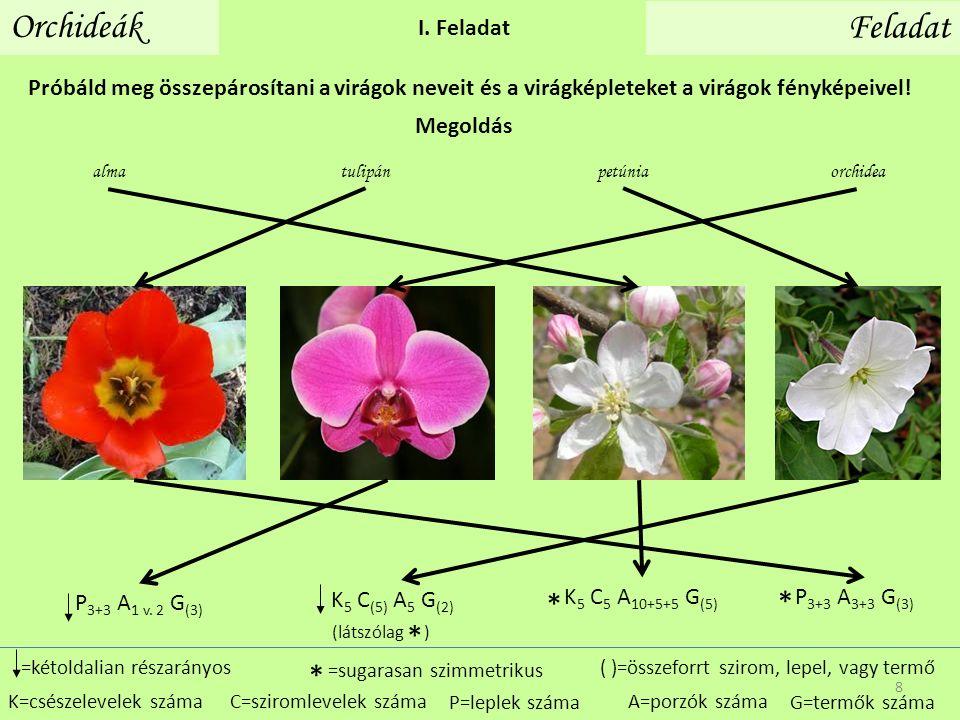 Orchideák Feladat I. Feladat Próbáld meg összepárosítani a virágok neveit és a virágképleteket a virágok fényképeivel! P=leplek száma =kétoldalian rés