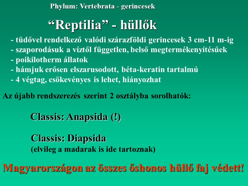 """""""Reptilia"""" - hüllők Phylum: Vertebrata - gerincesek Classis: Anapsida (!) - tüdővel rendelkező valódi szárazföldi gerincesek 3 cm-11 m-ig - szaporodás"""