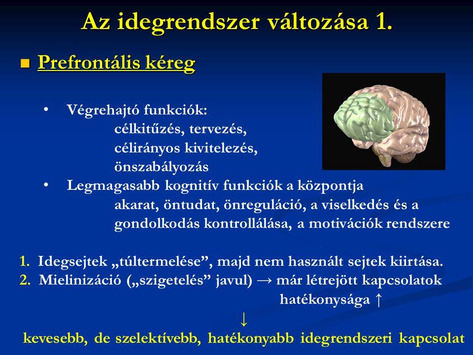 Az idegrendszer változása 1. Prefrontális kéreg Prefrontális kéreg Végrehajtó funkciók: célkitűzés, tervezés, célirányos kivitelezés, önszabályozás Le