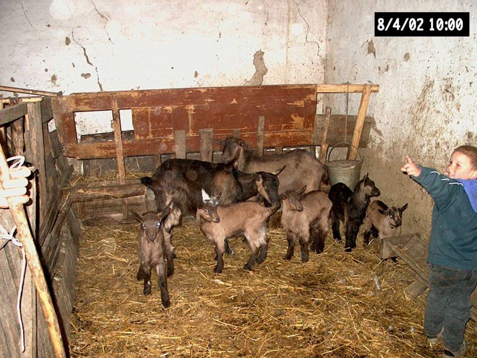 Földprogram áttekintése nagyvonalakban Állatok kihelyezése Fejéshez szükséges eszközök beszerzése Gomolya készítési eszközök beszerzése Gomolya értékesítése Tenyészállatok kihelyezése