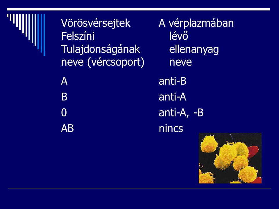 Vörösvérsejtek Felszíni Tulajdonságának neve (vércsoport) A vérplazmában lévő ellenanyag neve Aanti-B Banti-A 0anti-A, -B ABnincs
