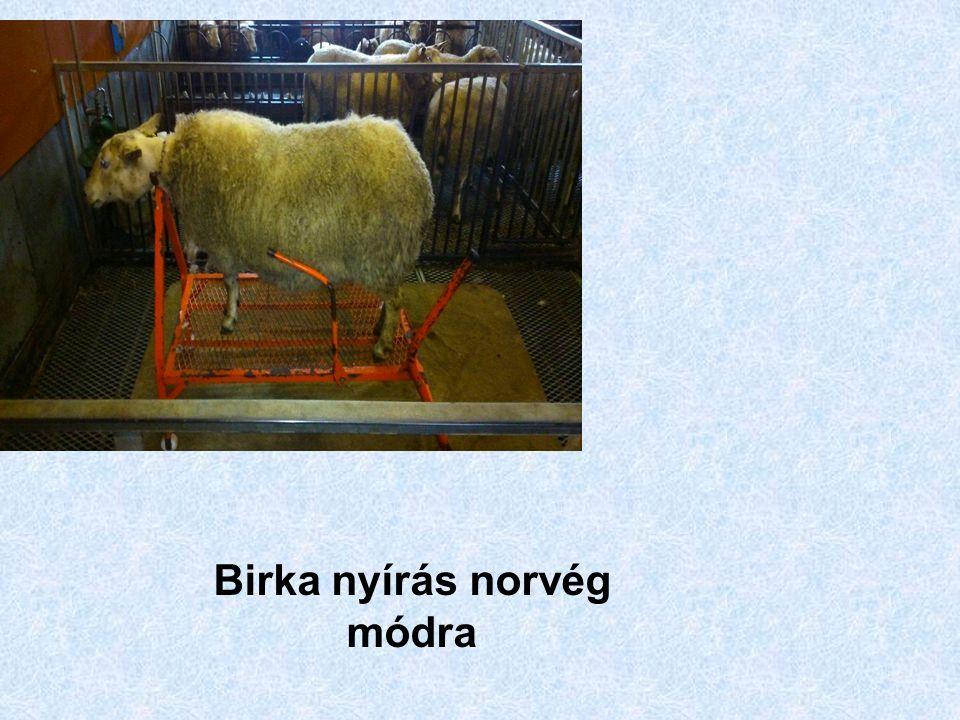 Birka nyírás norvég módra