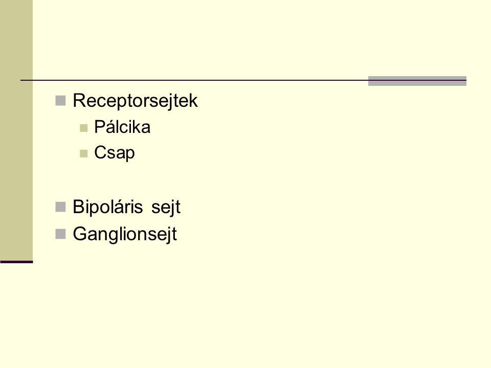 Receptorsejtek Pálcika Csap Bipoláris sejt Ganglionsejt