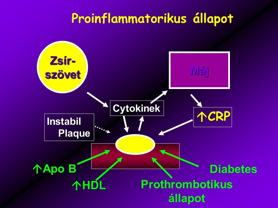 Zsír-szövet Máj Cytokinek Instabil Plaque Plaque  CRP Proinflammatorikus állapot  Apo B  HDL Prothrombotikus állapot Diabetes