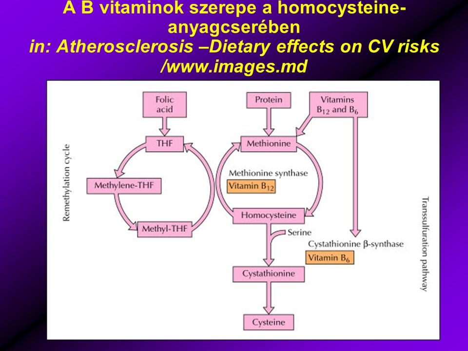 A B vitaminok szerepe a homocysteine- anyagcserében in: Atherosclerosis –Dietary effects on CV risks /www.images.md