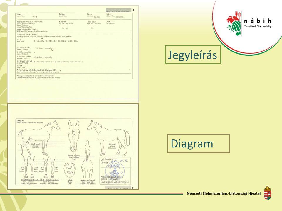 Jegyleírás Diagram