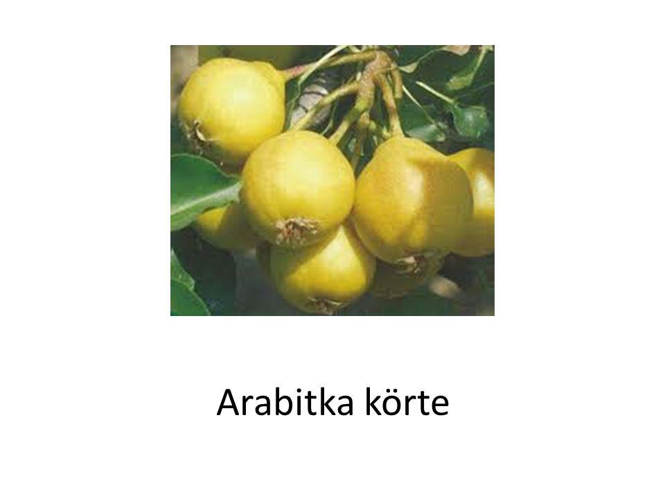 Arabitka körte