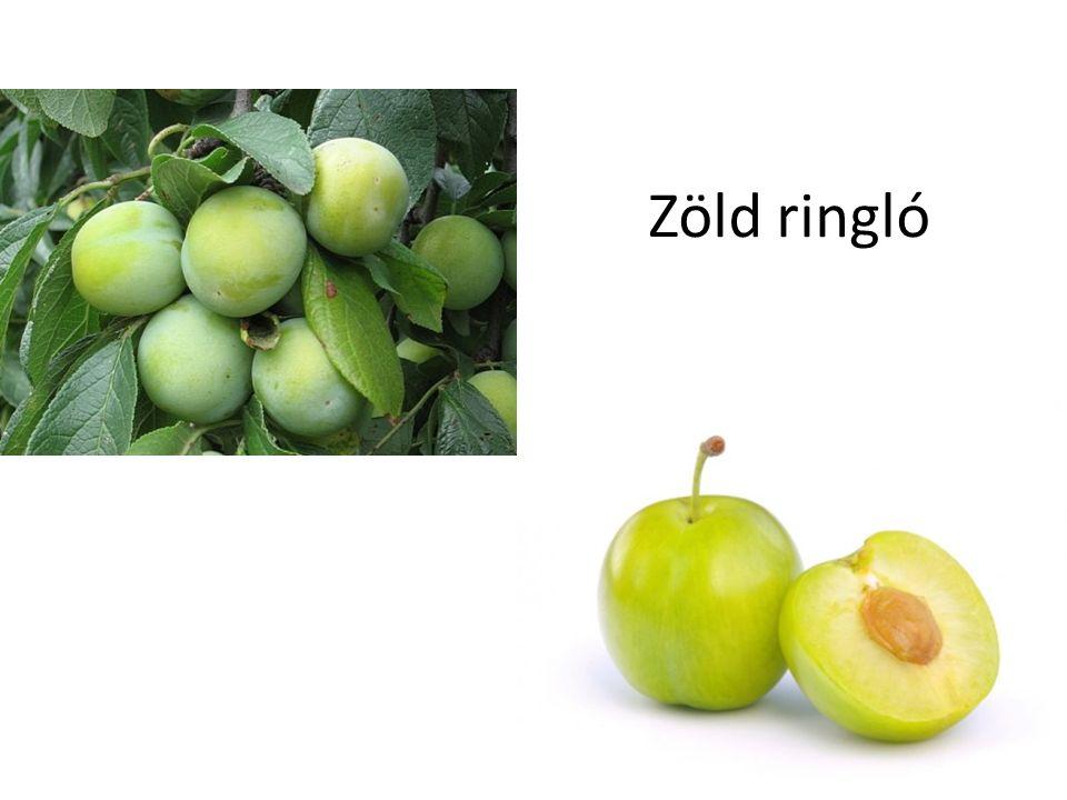 Zöld ringló