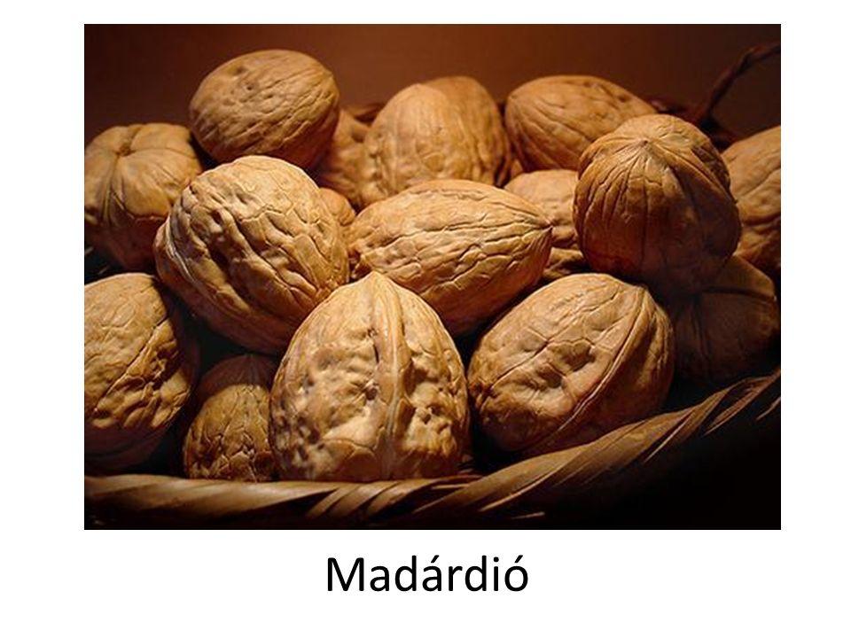 Madárdió