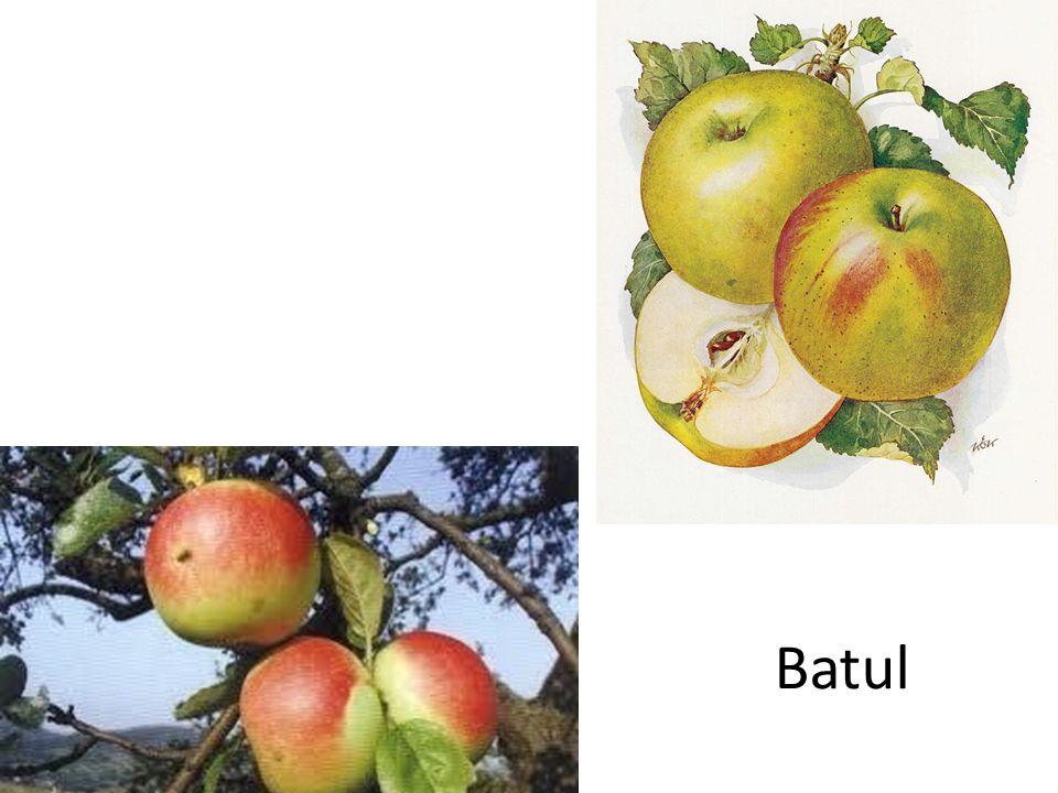 Batul