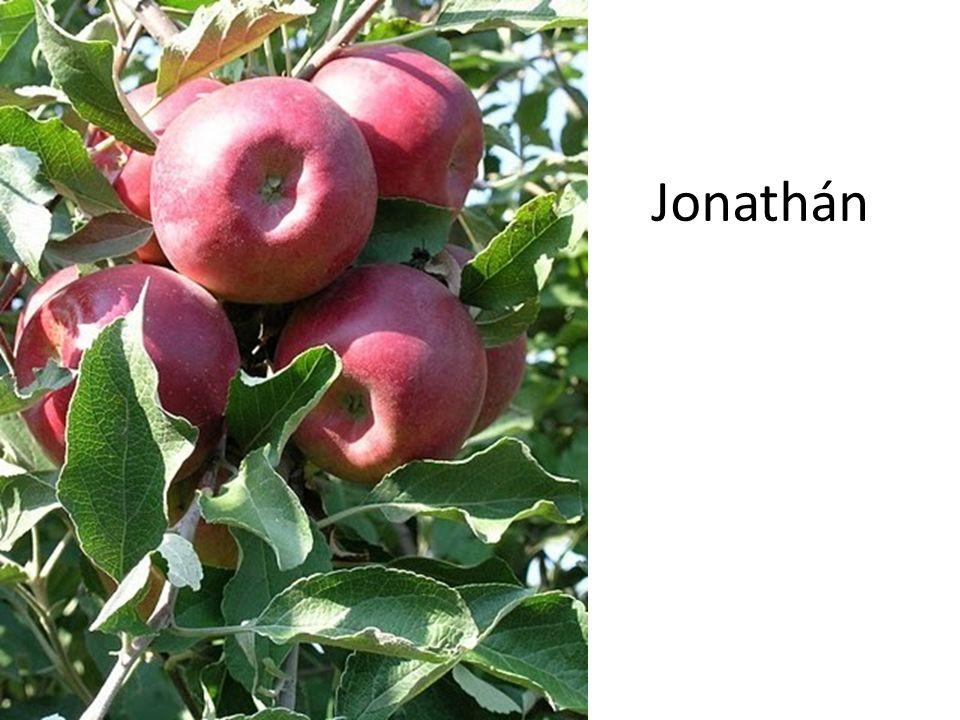 Jonathán