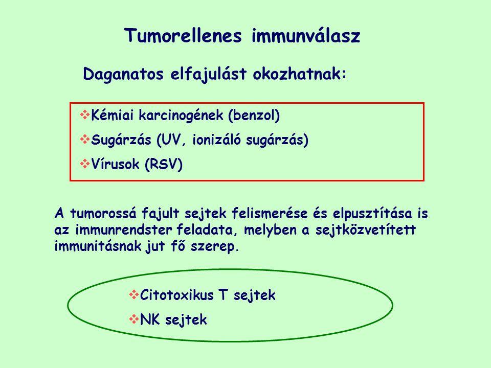 Tumorellenes immunválasz Daganatos elfajulást okozhatnak:  Kémiai karcinogének (benzol)  Sugárzás (UV, ionizáló sugárzás)  Vírusok (RSV) A tumoross