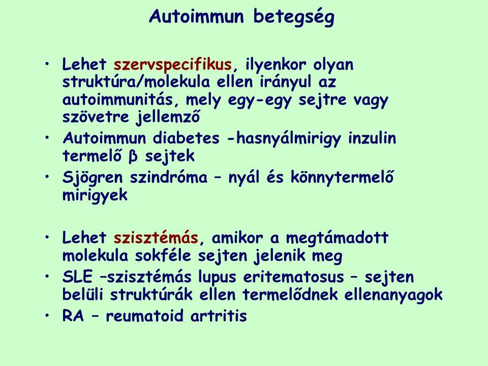Autoimmun betegség Lehet szervspecifikus, ilyenkor olyan struktúra/molekula ellen irányul az autoimmunitás, mely egy-egy sejtre vagy szövetre jellemző Autoimmun diabetes -hasnyálmirigy inzulin termelő β sejtek Sjögren szindróma – nyál és könnytermelő mirigyek Lehet szisztémás, amikor a megtámadott molekula sokféle sejten jelenik meg SLE –szisztémás lupus eritematosus – sejten belüli struktúrák ellen termelődnek ellenanyagok RA – reumatoid artritis