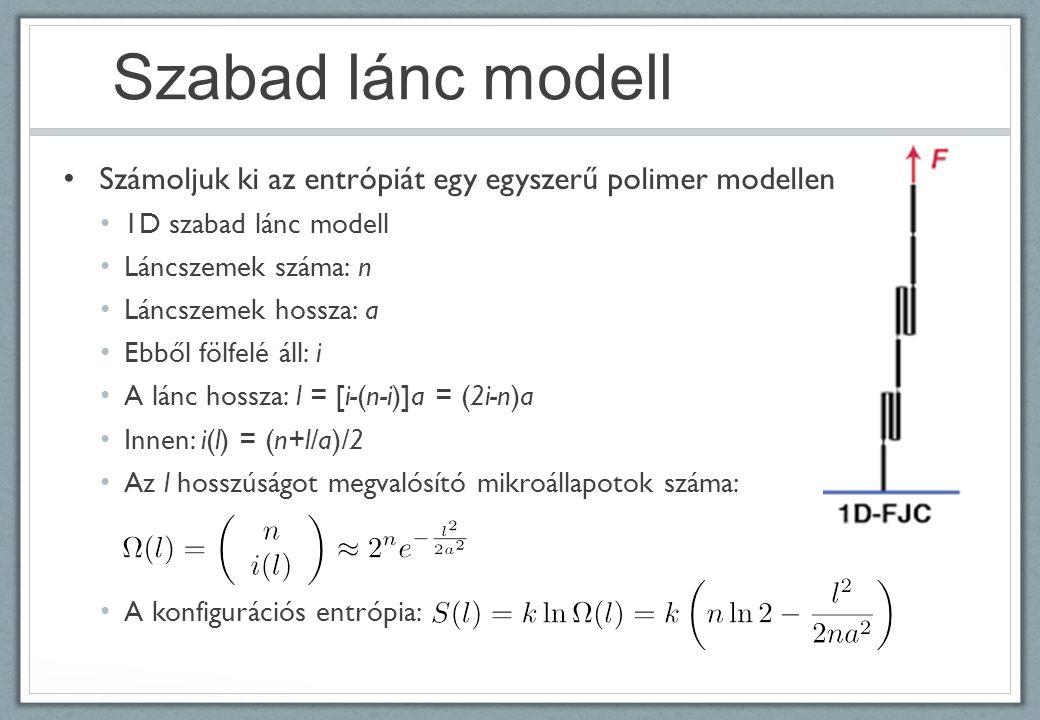 Szabad lánc modell Számoljuk ki az entrópiát egy egyszerű polimer modellen 1D szabad lánc modell Láncszemek száma: n Láncszemek hossza: a Ebből fölfelé áll: i A lánc hossza: l = [i-(n-i)]a = (2i-n)a Innen: i(l) = (n+l/a)/2 Az l hosszúságot megvalósító mikroállapotok száma: A konfigurációs entrópia: