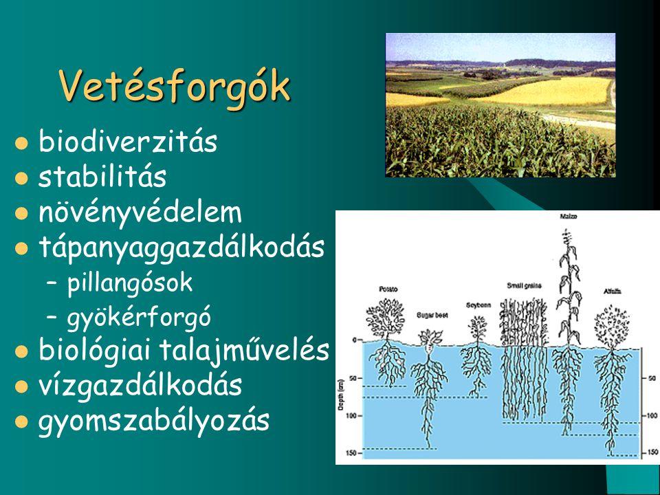 Vetésforgók biodiverzitás stabilitás növényvédelem tápanyaggazdálkodás –pillangósok –gyökérforgó biológiai talajművelés vízgazdálkodás gyomszabályozás