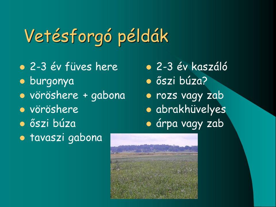 Vetésforgó példák 2-3 év füves here burgonya vöröshere + gabona vöröshere őszi búza tavaszi gabona 2-3 év kaszáló őszi búza.