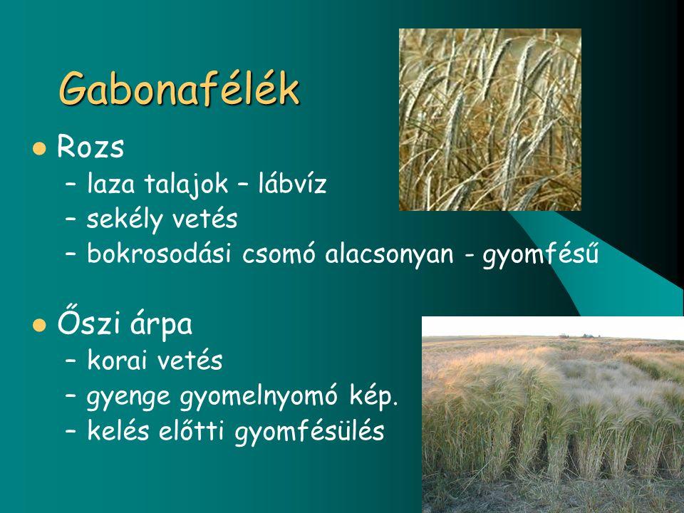 Gabonafélék Rozs –laza talajok – lábvíz –sekély vetés –bokrosodási csomó alacsonyan - gyomfésű Őszi árpa –korai vetés –gyenge gyomelnyomó kép.