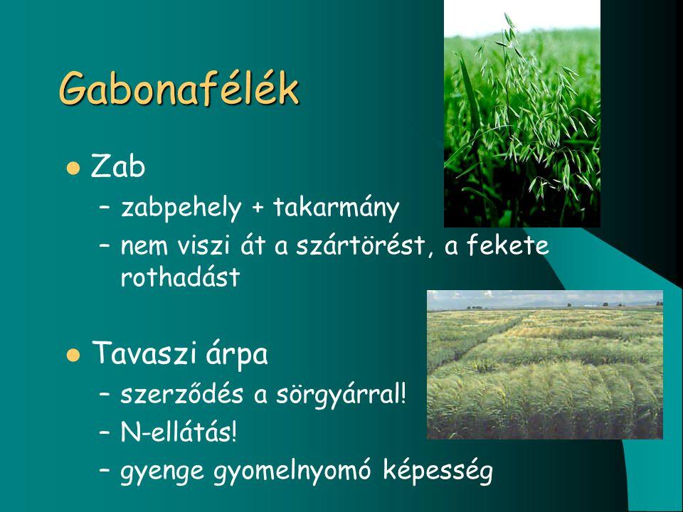 Gabonafélék Zab –zabpehely + takarmány –nem viszi át a szártörést, a fekete rothadást Tavaszi árpa –szerződés a sörgyárral.
