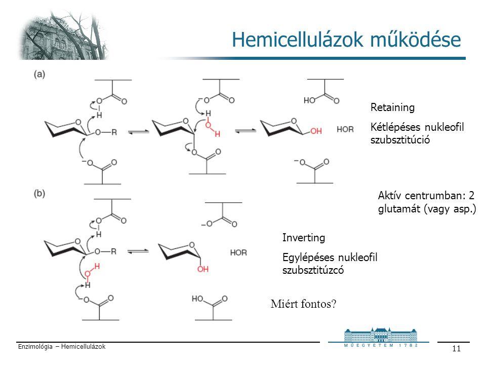 Enzimológia – Hemicellulázok 11 Hemicellulázok működése Retaining Kétlépéses nukleofil szubsztitúció Inverting Egylépéses nukleofil szubsztitúzcó Aktív centrumban: 2 glutamát (vagy asp.) Miért fontos