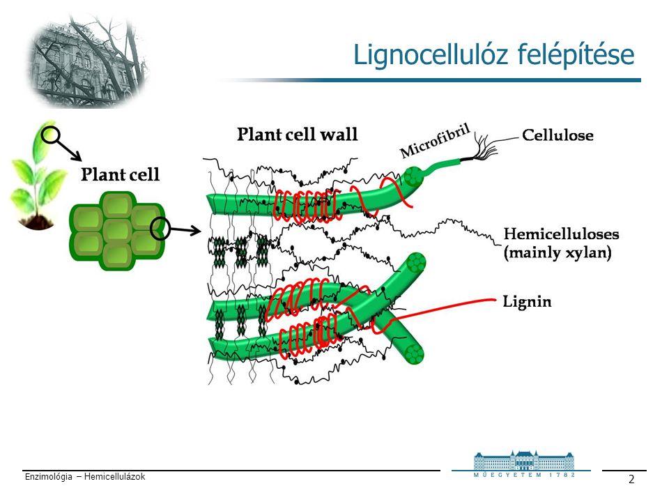 Enzimológia – Hemicellulázok 3 Lignocellulóz felépítése Cellulóz: lineáris homopolimer (β-D-glükóz egységek) DP= 2-20 ezer, hidrogén hidak, mikrofibrillumok, kristályos szerkezet) Lignin: komplex makromolekula, aromás vegyületek (gvajakol, fahéjalkohol stb), ellenállóság Hemicellulóz: heteropolimer (C5, C6), DP=2-3 száz, elágazásos, amorf szerkezet, Ligninnel kovalensen, cellulózzal főként H-hidak által kapcsolódik.