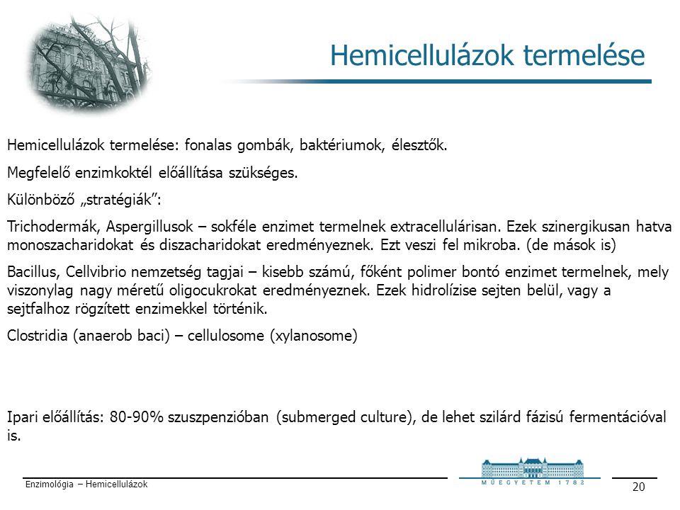 Enzimológia – Hemicellulázok 20 Hemicellulázok termelése Hemicellulázok termelése: fonalas gombák, baktériumok, élesztők.