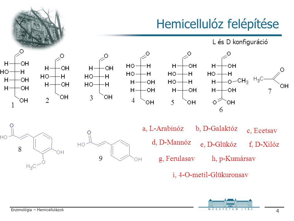 Enzimológia – Hemicellulázok 4 Hemicellulóz felépítése 1 2 6 5 7 8 3 9 4 b, D-Galaktóz a, L-Arabinóz d, D-Mannóz c, Ecetsav f, D-Xilóz e, D-Glükóz h, p-Kumársav g, Ferulasav i, 4-O-metil-Glükuronsav L és D konfiguráció