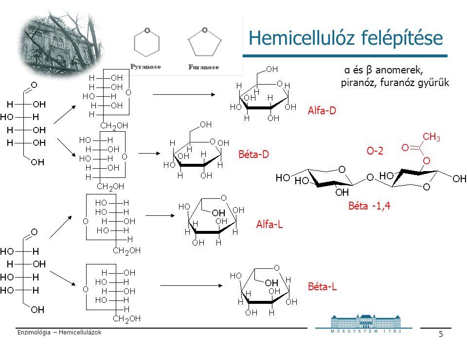 Arabinanázok (endo/exo 1,5 kötést), arabinofuranozidázok (1,2; 1,3; 1,5 kötés, terminális, nem redukáló végről, elágazásokat) Enzimológia – Hemicellulázok 16 α-L-arabinofuranozidázok GH3, GH43, GH51, GH54, GH62 3, 51, 54 – retaining, 43, 62 - inverting Szinergizmus xilanázokkal