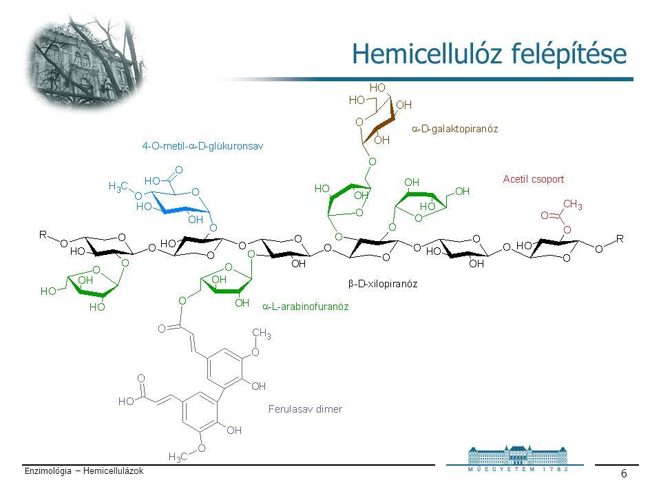 Enzimológia – Hemicellulázok 17 α-L-arabinofuranozidázok Nagyon változatosak szubsztrát specificitásuk tekintetében.