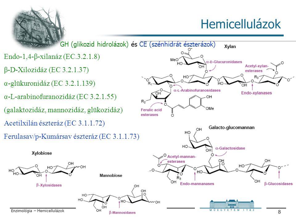 Enzimológia – Hemicellulázok 8 Hemicellulázok Endo-1,4-β-xilanáz (EC.3.2.1.8) β-D-Xilozidáz (EC 3.2.1.37) α-glükuronidáz (EC 3.2.1.139) α-L-arabinofuranozidáz (EC 3.2.1.55) (galaktozidáz, mannozidáz, glükozidáz) Acetilxilán észteráz (EC 3.1.1.72) Ferulasav/p-Kumársav észteráz (EC 3.1.1.73) GH (glikozid hidrolázok) és CE (szénhidrát észterázok)