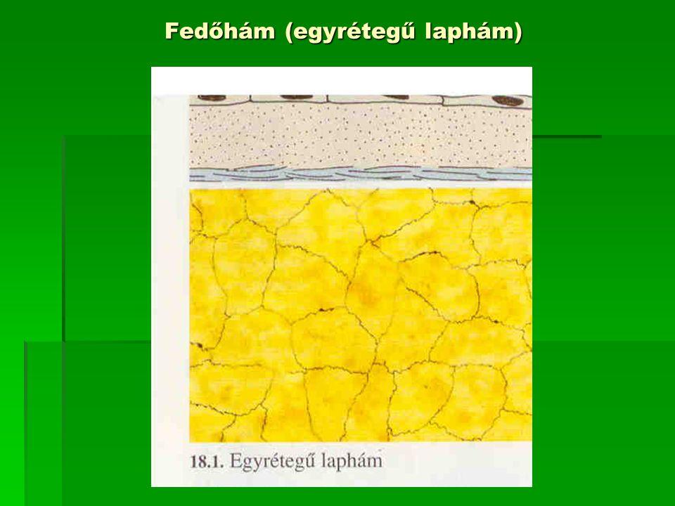 Fedőhám (egyrétegű laphám)