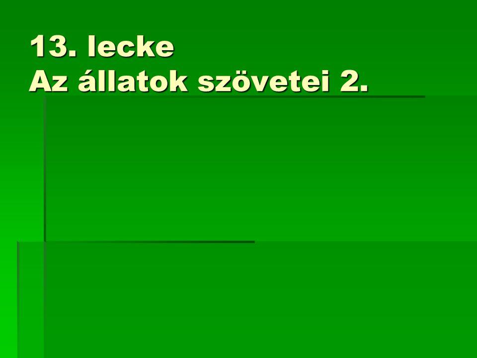 13. lecke Az állatok szövetei 2.