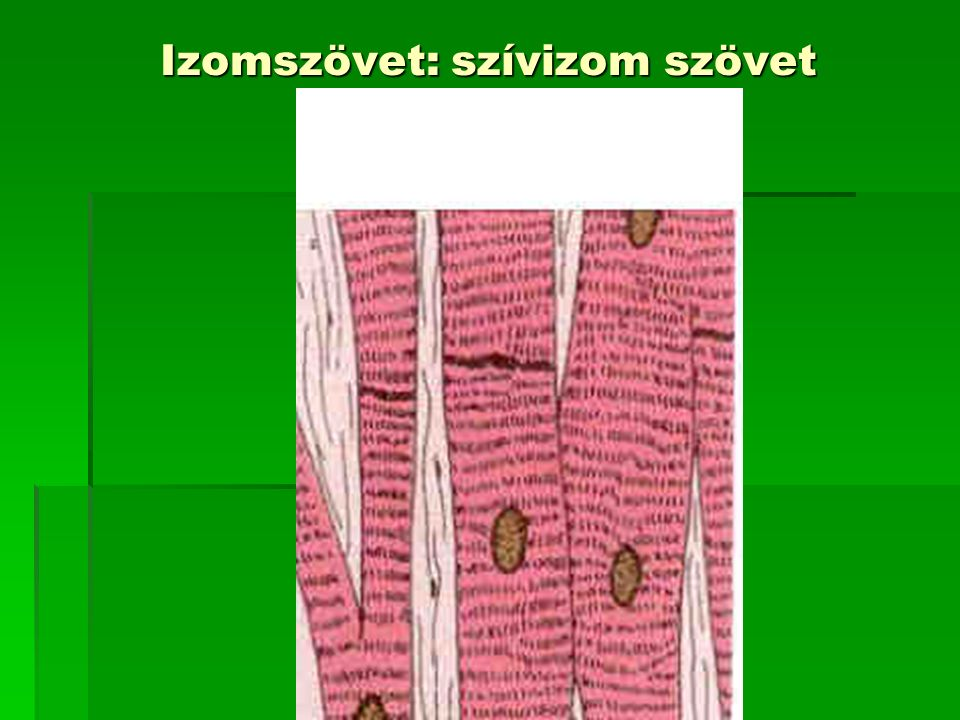 Izomszövet: szívizom szövet