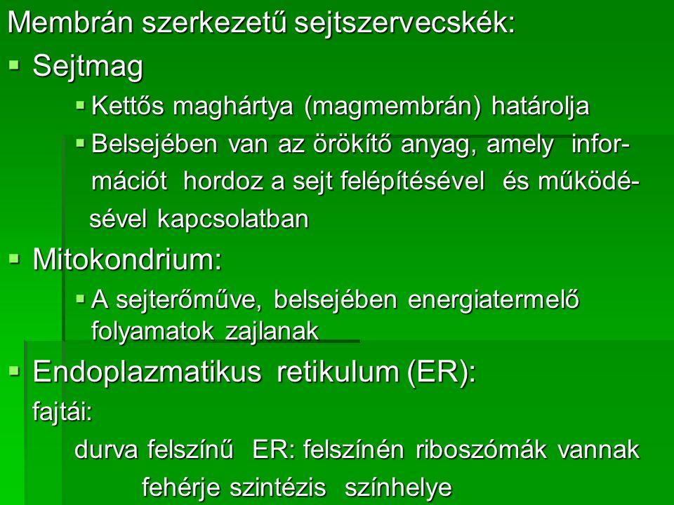 Membrán szerkezetű sejtszervecskék:  Sejtmag  Kettős maghártya (magmembrán) határolja  Belsejében van az örökítő anyag, amely infor- mációt hordoz a sejt felépítésével és működé- sével kapcsolatban sével kapcsolatban  Mitokondrium:  A sejterőműve, belsejében energiatermelő folyamatok zajlanak  Endoplazmatikus retikulum (ER): fajtái: durva felszínű ER: felszínén riboszómák vannak fehérje szintézis színhelye