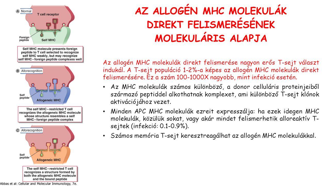 AZ ALLOGÉN MHC MOLEKULÁK DIREKT FELISMERÉSÉNEK MOLEKULÁRIS ALAPJA Az allogén MHC molekulák direkt felismerése nagyon erős T-sejt választ indukál.