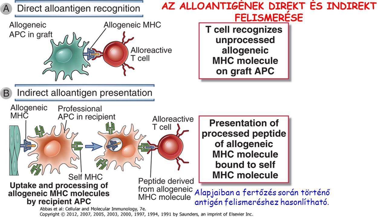 Alapjaiban a fertőzés során történő antigén felismeréshez hasonlítható.