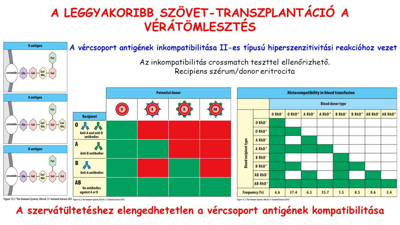 A LEGGYAKORIBB SZÖVET-TRANSZPLANTÁCIÓ A VÉRÁTÖMLESZTÉS Az inkompatibilitás crossmatch teszttel ellenőrizhető.