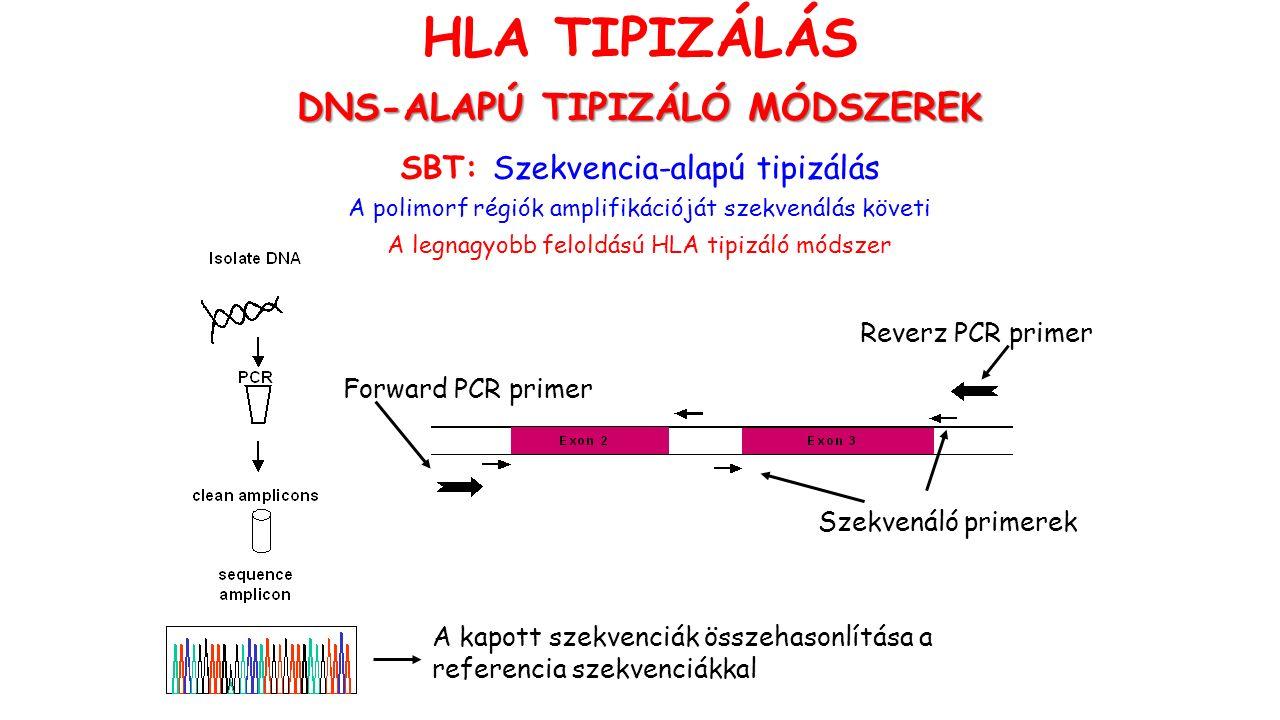 SBT: Szekvencia-alapú tipizálás A polimorf régiók amplifikációját szekvenálás követi A legnagyobb feloldású HLA tipizáló módszer Forward PCR primer Szekvenáló primerek Reverz PCR primer A kapott szekvenciák összehasonlítása a referencia szekvenciákkal HLA TIPIZÁLÁS DNS-ALAPÚ TIPIZÁLÓ MÓDSZEREK