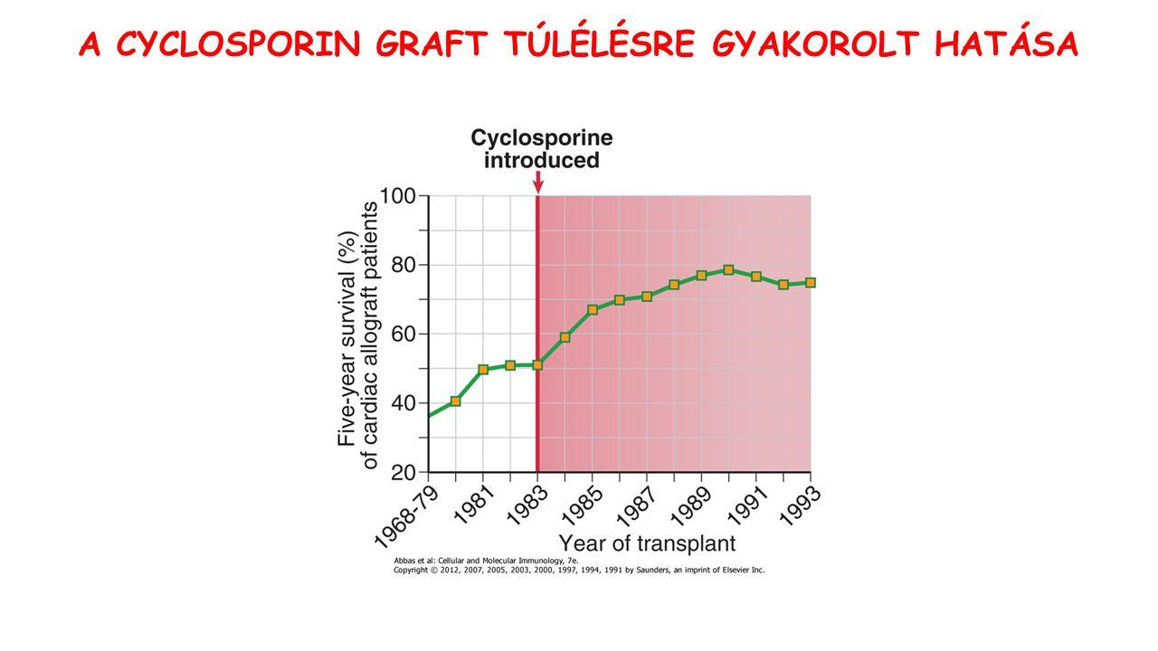 A CYCLOSPORIN GRAFT TÚLÉLÉSRE GYAKOROLT HATÁSA