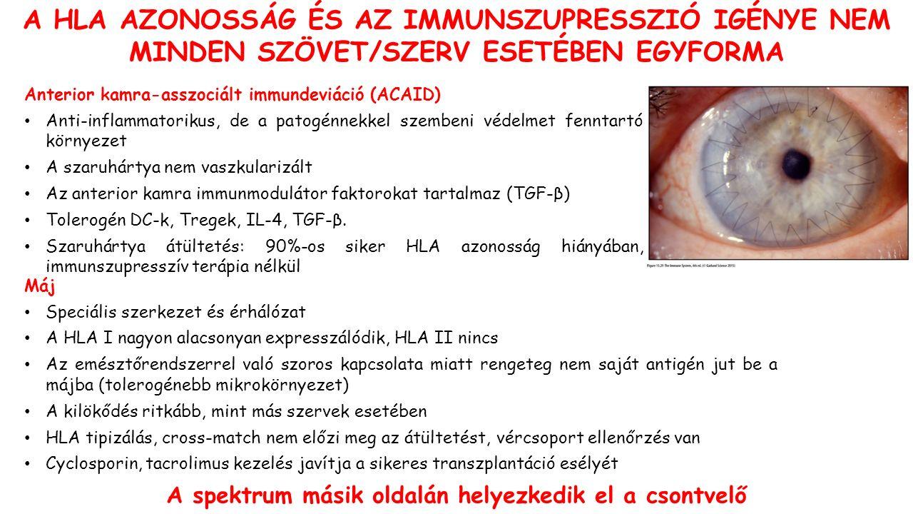 A HLA AZONOSSÁG ÉS AZ IMMUNSZUPRESSZIÓ IGÉNYE NEM MINDEN SZÖVET/SZERV ESETÉBEN EGYFORMA Anterior kamra-asszociált immundeviáció (ACAID) Anti-inflammatorikus, de a patogénnekkel szembeni védelmet fenntartó környezet A szaruhártya nem vaszkularizált Az anterior kamra immunmodulátor faktorokat tartalmaz (TGF-β) Tolerogén DC-k, Tregek, IL-4, TGF-β.