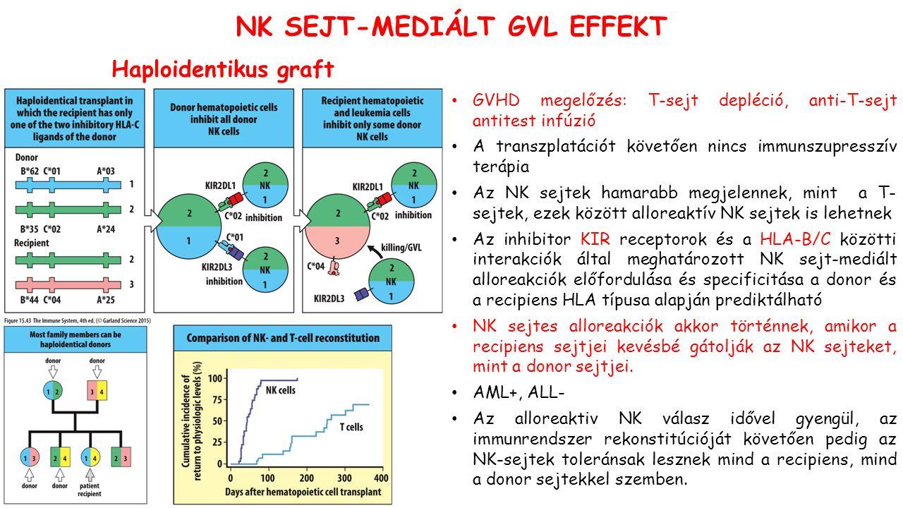 Haploidentikus graft NK SEJT-MEDIÁLT GVL EFFEKT GVHD megelőzés: T-sejt depléció, anti-T-sejt antitest infúzió A transzplatációt követően nincs immunszupresszív terápia Az NK sejtek hamarabb megjelennek, mint a T- sejtek, ezek között alloreaktív NK sejtek is lehetnek Az inhibitor KIR receptorok és a HLA-B/C közötti interakciók által meghatározott NK sejt-mediált alloreakciók előfordulása és specificitása a donor és a recipiens HLA típusa alapján prediktálható NK sejtes alloreakciók akkor történnek, amikor a recipiens sejtjei kevésbé gátolják az NK sejteket, mint a donor sejtjei.
