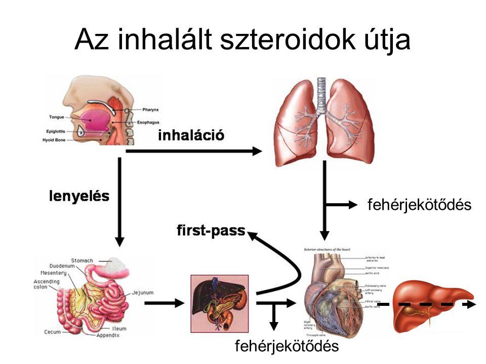 fehérjekötődés Az inhalált szteroidok útja fehérjekötődés