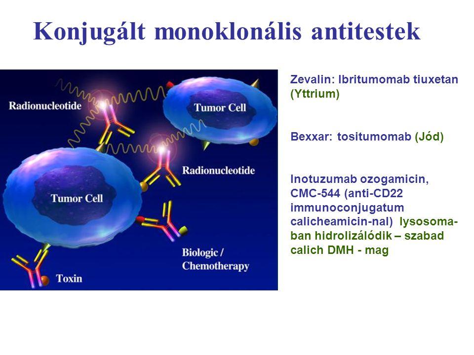 Konjugált monoklonális antitestek Zevalin: Ibritumomab tiuxetan (Yttrium) Bexxar: tositumomab (Jód) Inotuzumab ozogamicin, CMC-544 (anti-CD22 immunoconjugatum calicheamicin-nal) lysosoma- ban hidrolizálódik – szabad calich DMH - mag