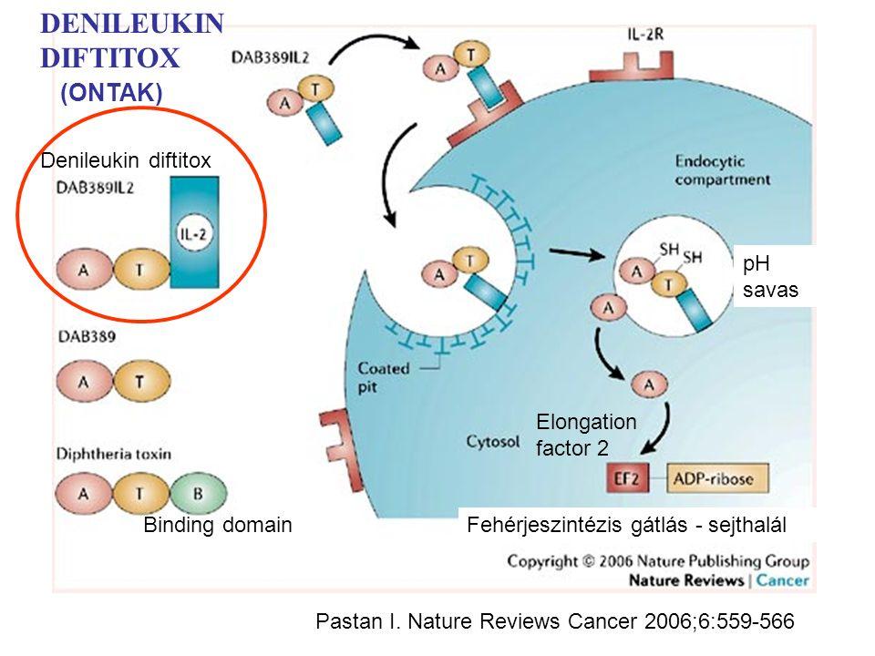 Denileukin diftitox Binding domainFehérjeszintézis gátlás - sejthalál DENILEUKIN DIFTITOX pH savas Elongation factor 2 Pastan I.