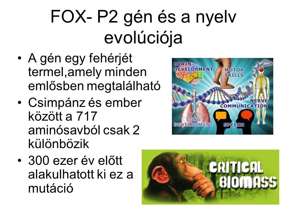 FOX- P2 gén és a nyelv evolúciója A gén egy fehérjét termel,amely minden emlősben megtalálható Csimpánz és ember között a 717 aminósavból csak 2 különbözik 300 ezer év előtt alakulhatott ki ez a mutáció