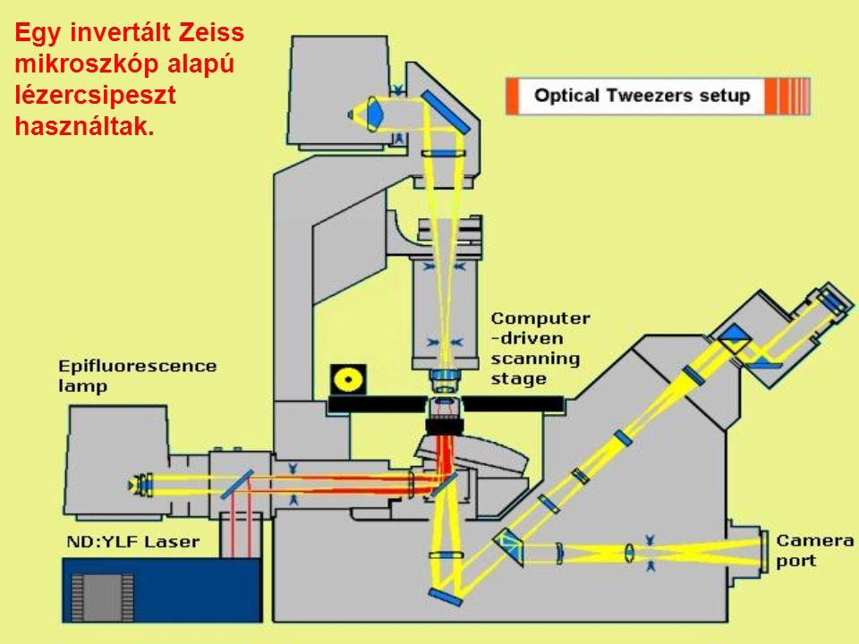 Egy invertált Zeiss mikroszkóp alapú lézercsipeszt használtak.