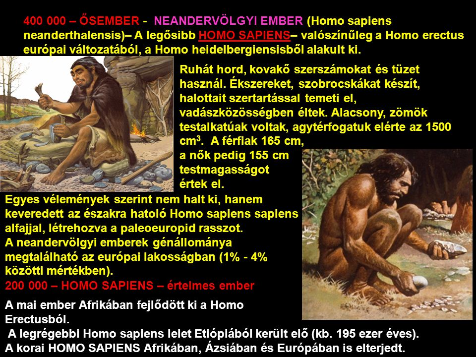 400 000 – ŐSEMBER - NEANDERVÖLGYI EMBER (Homo sapiens neanderthalensis)– A legősibb HOMO SAPIENS– valószínűleg a Homo erectus európai változatából, a Homo heidelbergiensisből alakult ki.