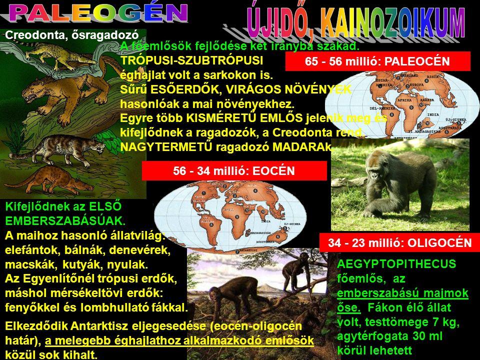 65 - 56 millió: PALEOCÉN Creodonta, ősragadozó 56 - 34 millió: EOCÉN Kifejlődnek az ELSŐ EMBERSZABÁSÚAK.