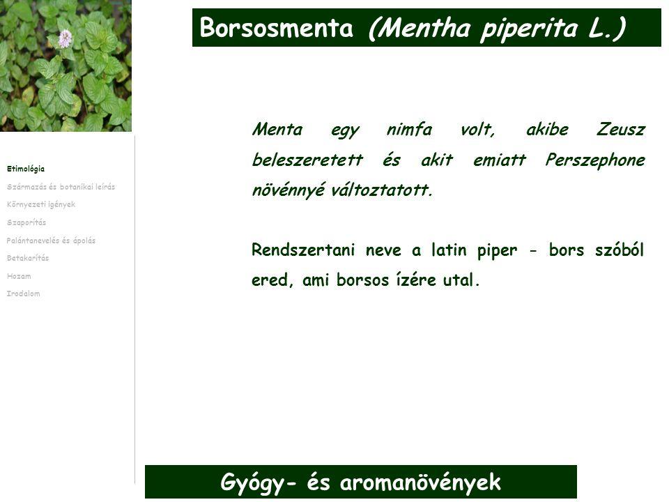 Gyógy- és aromanövények Menta egy nimfa volt, akibe Zeusz beleszeretett és akit emiatt Perszephone növénnyé változtatott.