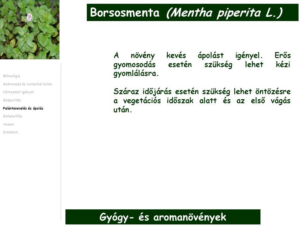 A növény kevés ápolást igényel. Erős gyomosodás esetén szükség lehet kézi gyomlálásra.